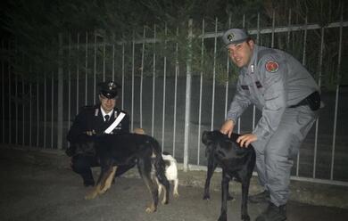 Immagine News - maltrattamento-di-animali-denunciato-37enne-a-mordano