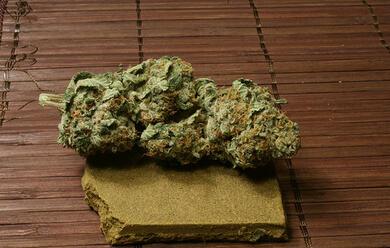 Immagine News - rimini-trovata-piantagione-di-cannabis-sequestrati-50-kg-di-droga