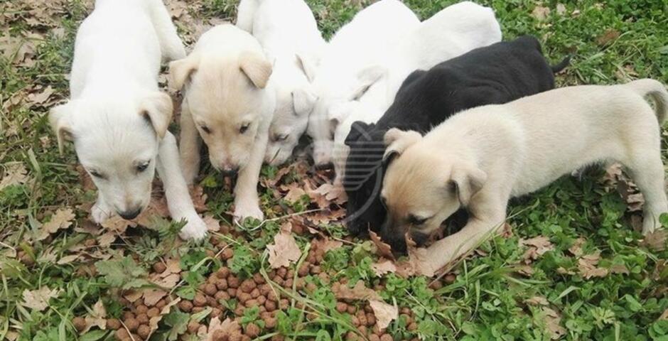 Traffico illegale di cani, cinofili parte civile