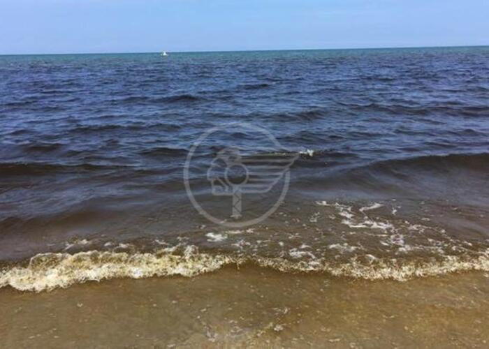 Mare rosso, colpa di un'alga non dannosa per la salute