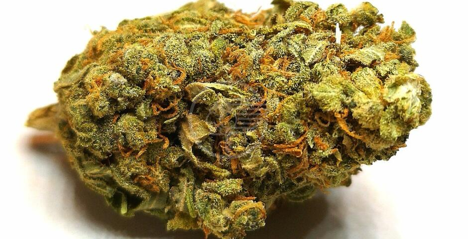 Negli Stati Uniti, dove la cannabis è legale, riduzione dei decessi per overdose da oppiacei