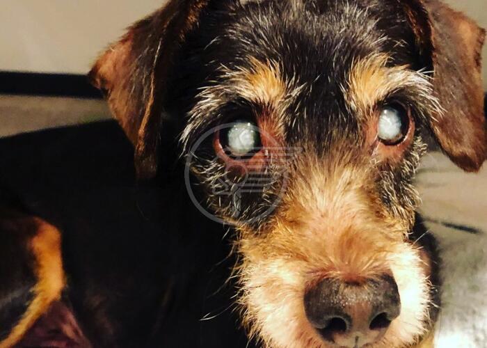 Lola, la cagnetta cieca, trova casa e famiglia