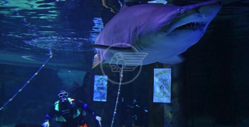 Il Presepe del Mare vegliato dagli squali toro