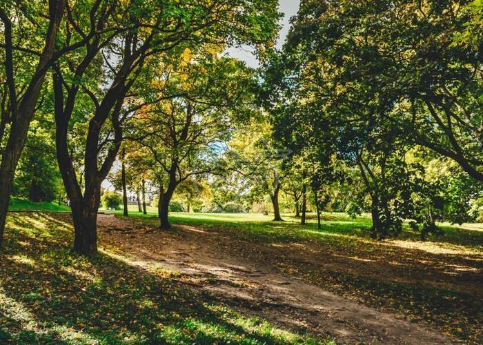 Altri 50 nuovi alberi a S. Andrea in Besanigo
