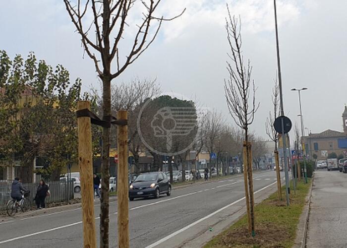 Nuovi alberi a dimora lungo le strade cittadine