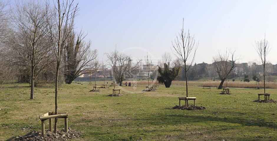 Attestati del Comune ai donatori di alberi