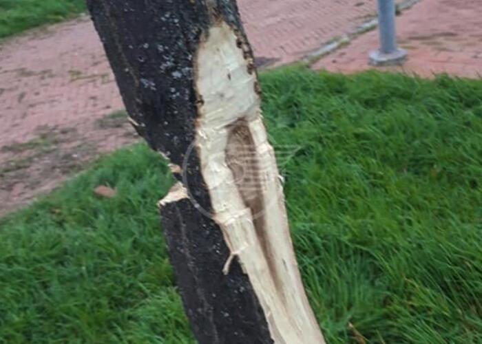 Scempio arboreo davanti all'ex nuova questura. La condanna della Mascioni