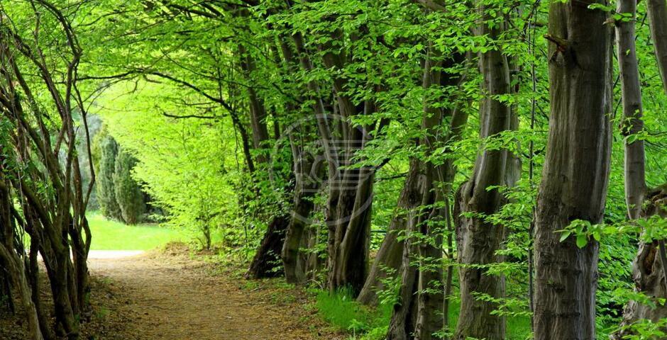 Cattolica, un nuovo polmone verde da oltre 2500 alberi