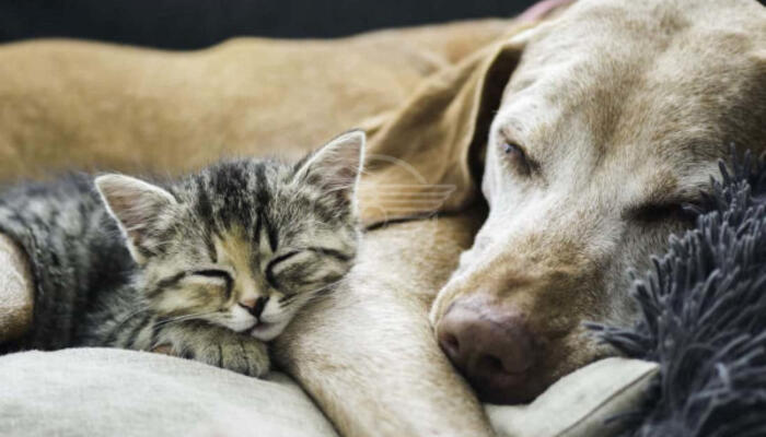 Nuovo canile e gattile a Spadarolo, arriva il via libera dalla Regione