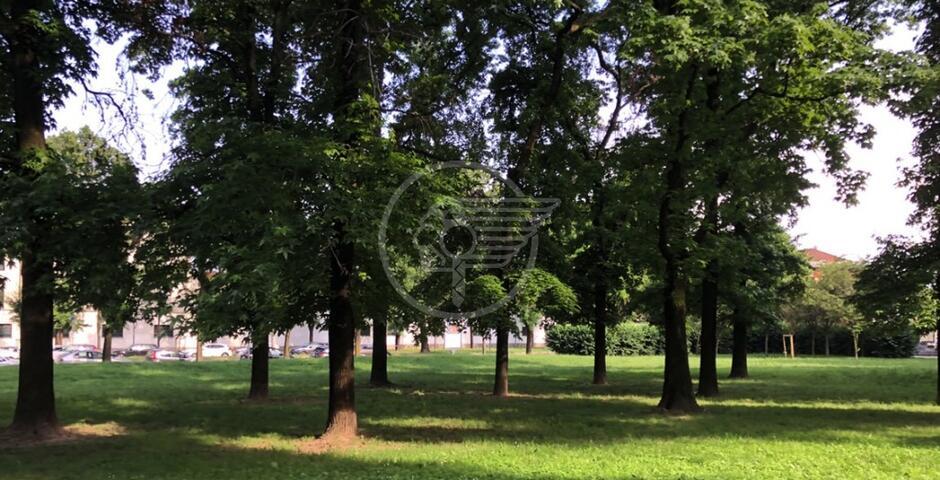 Si potenzia il verde urbano: boschi antismog e barriere per ridurre calore e polveri