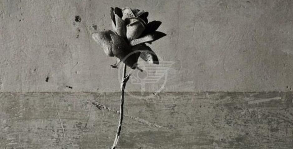 """Alla Galleria dell'Immagine la mostra """"Se mi cerchi"""" di Luigi Poiaghi"""