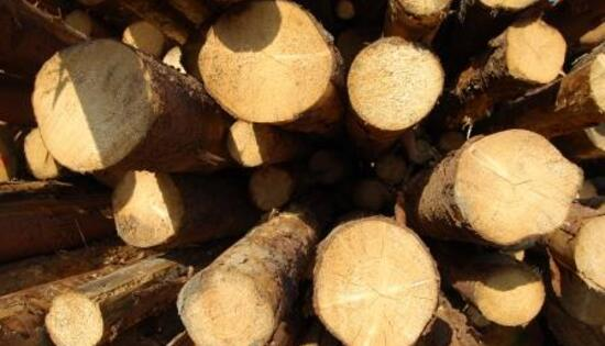 netconcrete it due-diligence-regolamento-eutr-per-contrastare-il-legno-illegale-n614 007