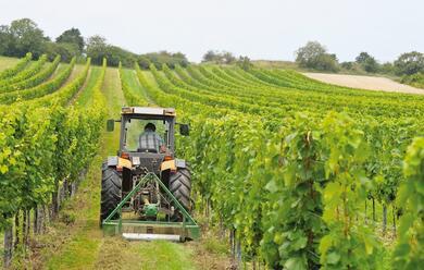 Immagine News - la-mappa-della-romagna-del-vino-nelle-sue-18-dop-e-igp