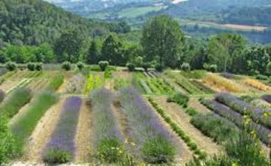 gusto-tra-piante-officinali-ed-erbe-spontanee-la-romagna-verde-di-primavera