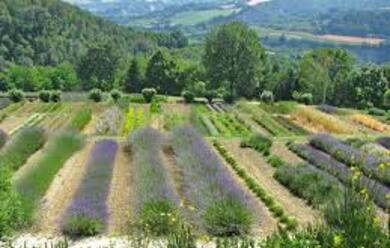 Immagine News - gusto-tra-piante-officinali-ed-erbe-spontanee-la-romagna-verde-di-primavera