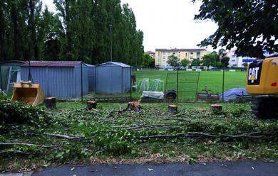 Immagine News - faenza-alberi-tagliati-il-dibattito-in-citta-la-averitaa-del-sindaco-sui-costi-del-comune
