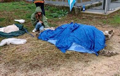 Immagine News - ostellato-ex-maneggio-fallito-cavalli-morti-per-abbandono-volontari-in-campo