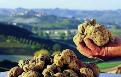 Immagine News - laintenso-aroma-della-terra-au-arrivato-il-tempo-del-tartufo.-il-18-sagra-a-brisighella