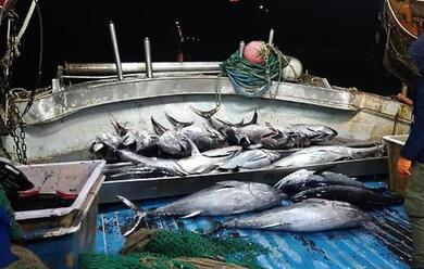 Immagine News - la-guardia-costiera-sequestra-13-quintali-di-prodotti-ittici
