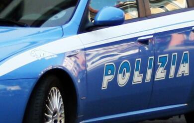 Immagine News - rimini-smantellato-traffico-illegale-di-cani