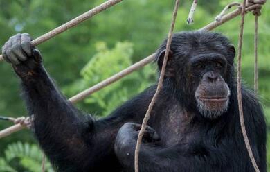 Immagine News - ravenna-oggi-ha-riaperto-lo-zoo-safari-alla-standiana