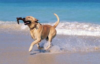Immagine News - i-bagnini-quotdi-nuovo-insieme-contro-labusivismo.-ma-sullaccesso-ai-cani-serve-buon-sensoquot