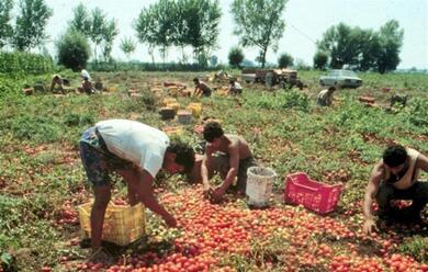 Immagine News - ravenna-sfrutta-lavoratori-in-nero-multa-di-5600-euro