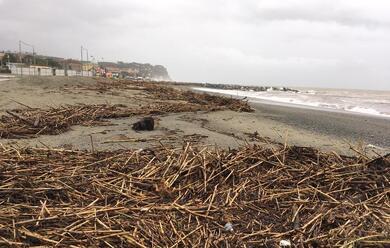 Immagine News - ravenna-maltempo-al-via-la-rimozione-di-250-tonnellate-di-legname-dalle-spiagge