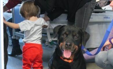 la-pet-therapy-cresce-per-aiutare-bambini-malati-e-disabili