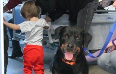 Immagine News - la-pet-therapy-cresce-per-aiutare-bambini-malati-e-disabili