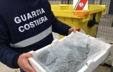 Immagine News - ravenna-controlli-sulla-filiera-ittica-sequestrati-143-kg-di-pesce
