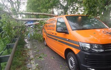 Immagine News - violenta-grandinata-nel-lughese-albero-si-abbatte-su-un-furgone
