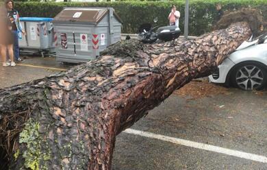 Immagine News - maltempo-trombe-marine-nel-riminese-e-nel-ravennate-alberi-caduti-a-milano-marittima