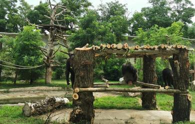 Immagine News - world-chimpanzee-day-al-safari-ravenna-si-festeggia-un-progetto-di-conservazione-europeo