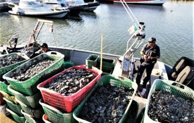 Immagine News - marina-di-ravenna-pesca-abusiva-blitz-della-finanza-fermato-peschereggio-con-670-kg-di-vongole