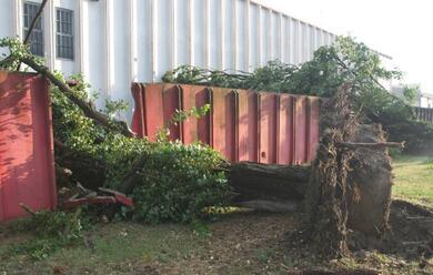 Immagine News - ravenna-maltempo-un-albero-si-abbatte-su-un-capannone