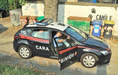 Immagine News - ravenna-cerca-di-scavalcare-la-recinzione-del-canile-bloccato-dai-carabinieri