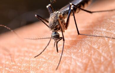 Immagine News - faenza-lunione-dei-comuni-attiva-contro-le-zanzare-dopo-il-caso-di-west-nile-ad-argenta