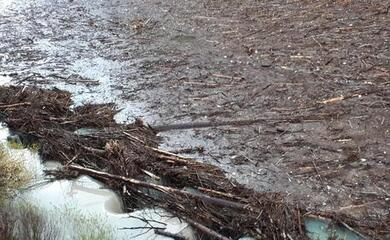 alberi-abbattuti-in-veneto-dal-ciclone-vaia-diventano-energia-pulita-tramite-le-centrali-a-biomasse-di-russi-e-finale-emilia