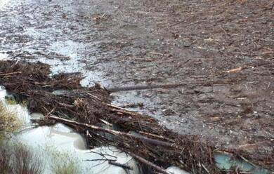 Immagine News - alberi-abbattuti-in-veneto-dal-ciclone-vaia-diventano-energia-pulita-tramite-le-centrali-a-biomasse-di-russi-e-finale-emilia