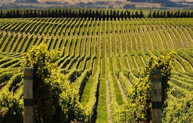 Immagine News - coronavirus-dalla-regione-un-bando-da-165-milioni-di-euro-per-il-comparto-vitivinicolo