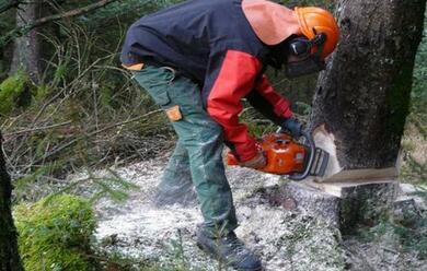 Immagine News - in-emilia-romagna-oggi-sono-tornati-al-lavoro-oltre-10mila-boscaioli