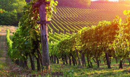 vino-gambero-rosso-riconosce-8-tre-bicchieri-conil-sangiovese-vero-testimonedella-romagna