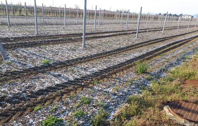 Immagine News - romagna-lallarme-di-coldiretti-gelate-notturne-sui-campi-danni-ingenti-alle-fioriture