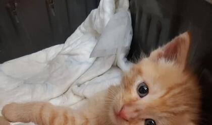 bizzuno-torna-la-aserata-delle-coccolea-allinfermeria-felina