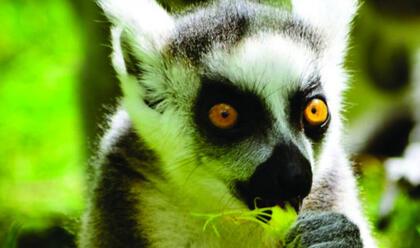 Immagine News - ravenna-zoo-safari-il-direttore-paci-acau-voglia-di-stare-allaria-aperta-afflusso-in-linea-con-quello-del-2019a