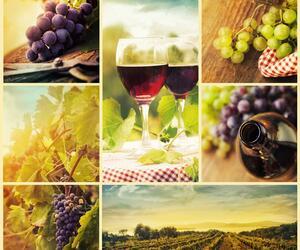 Di Vino in Vino Codere